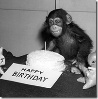 Happy-Birthday-Chimp-Note-Card-C11765288